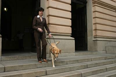 Tipos de perros, de asistencia
