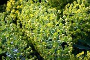 Plantas frondosas que son autótrofas