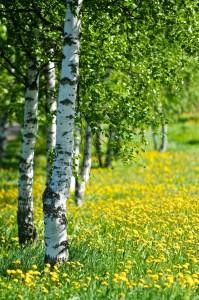 Las plantas terrestres son organismos autótrofos