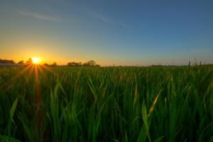 Puesta de sol en un campo