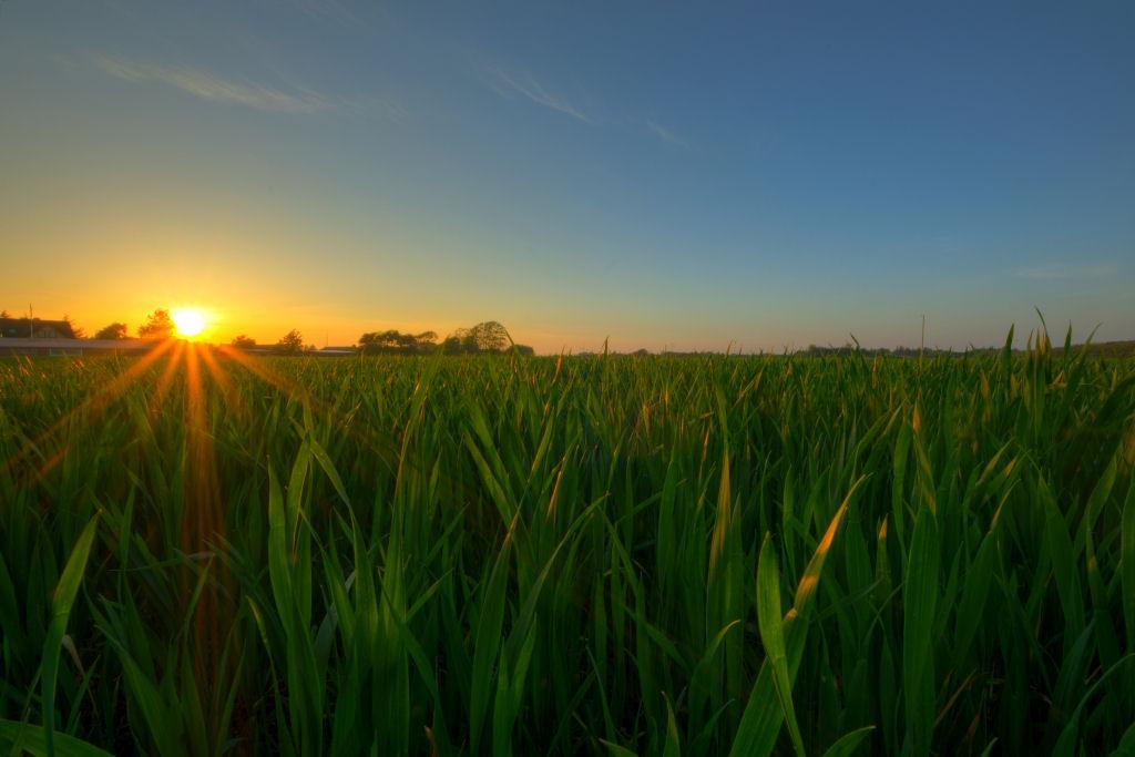 10 ejemplos de factores abi ticos for Que elementos conforman el suelo