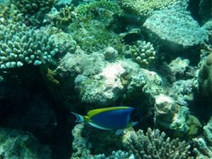 Arrecife de coral como biótico