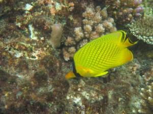 Varios organismos acuáticos ,como los peces o los corales son seres pluricelulares.