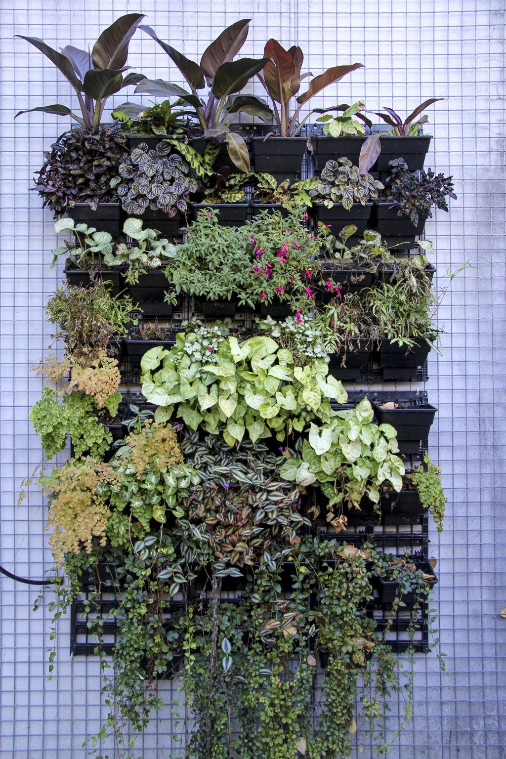 10 ejemplos de organismos pluricelulares for Plantas jardin vertical